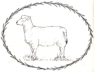 Sheep P and Ink