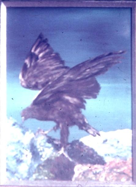 Eagle on Rocks